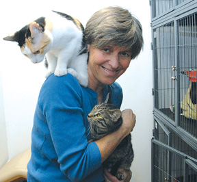 Animal rescuer finds herself fending off 'cat lady' stigma