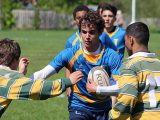 Falcons glide into rugby playoffs